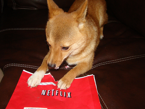 Netflix Survey: Subscribers Happy with Overall Experience