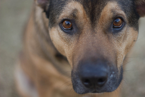 Dogs Survey: Nearly All Future Owners Open to Rescuing