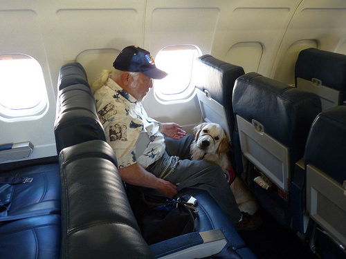 Pet-Friendly Travel Survey: About Half Care More About Pets' Comfort