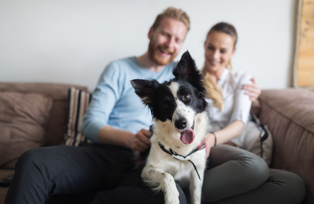 Living the Ruff Life – A Portrait of Dog Ownership